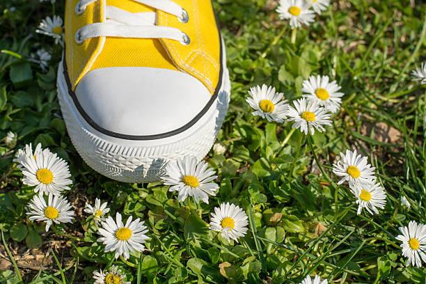 Yellow sneaker in dasiy field stock photo