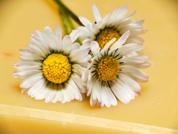 gele zeep met gemeenschappelijke daisies macrodetail - madeliefje stockfoto's en -beelden