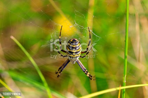 Yellow spider in the center of a web