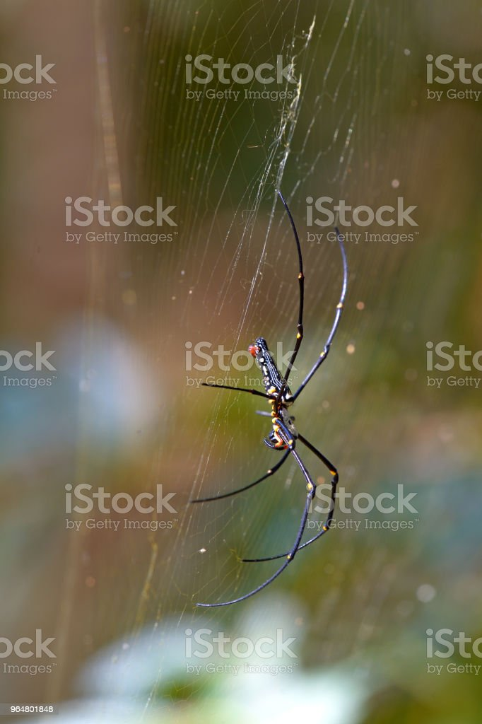 yellow spider on web royalty-free stock photo