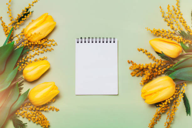 yellow spring flowers and a note book on green background. - immagini mimosa 8 marzo foto e immagini stock