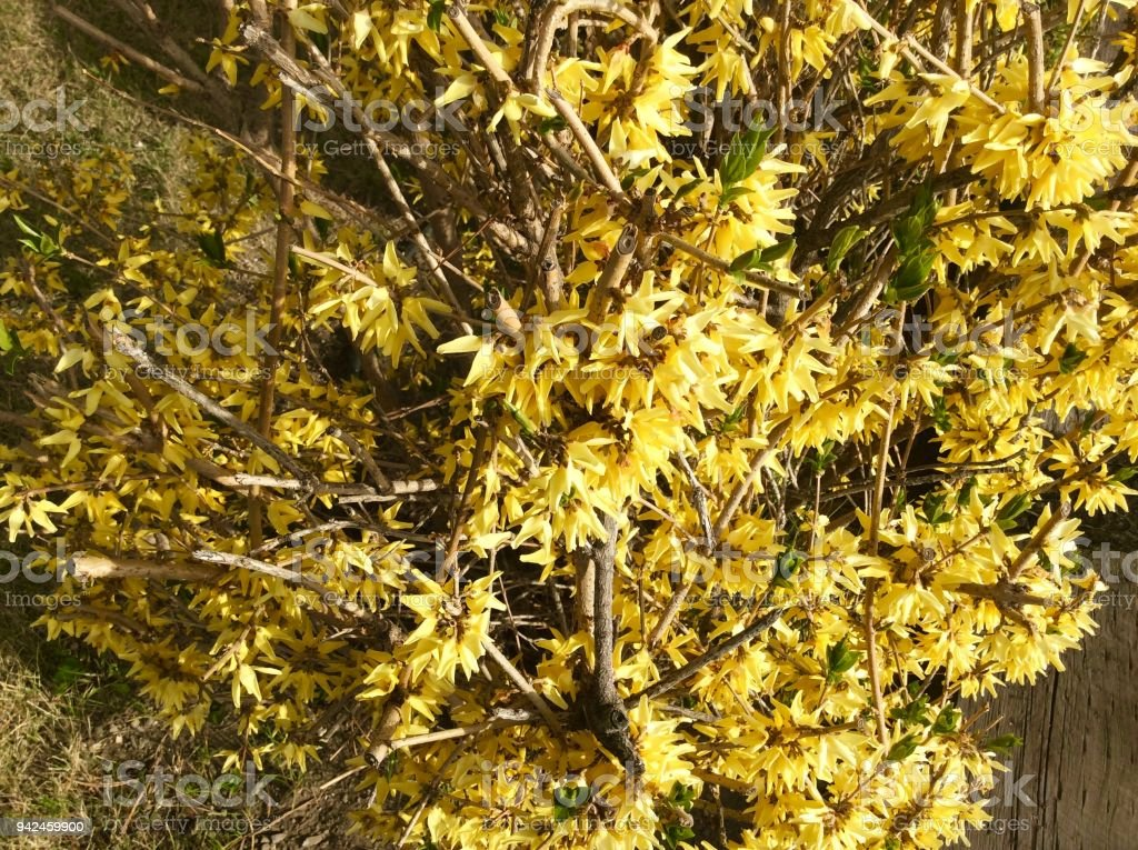 Yellow Spring Flowers and Foilage stock photo