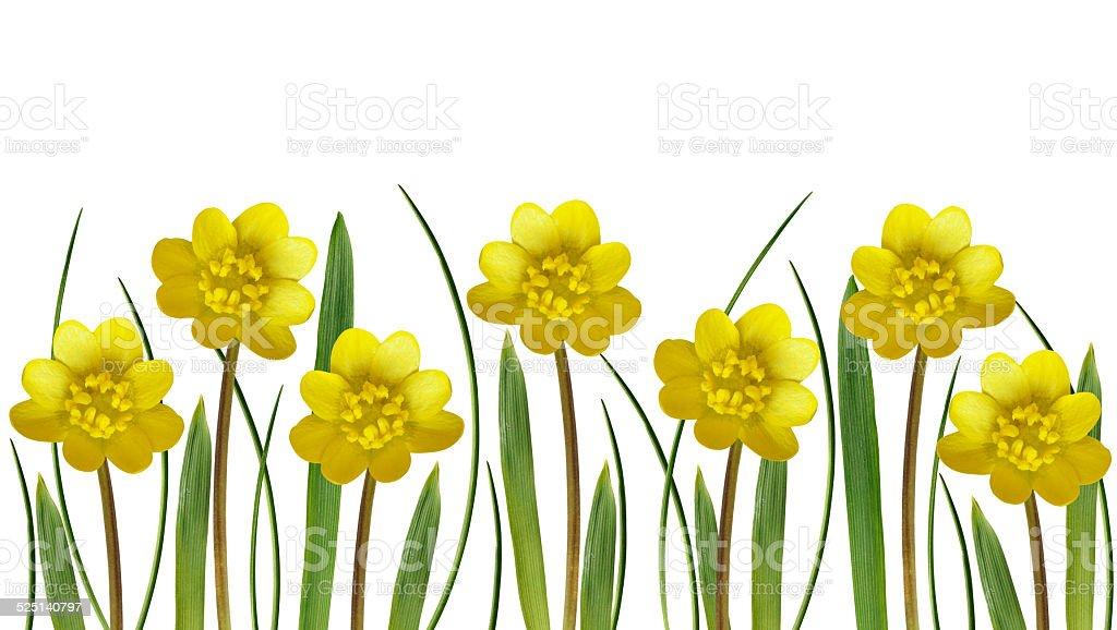Yellow spring flowers and grass stock photo 525140797 istock yellow spring flowers and grass royalty free stock photo mightylinksfo