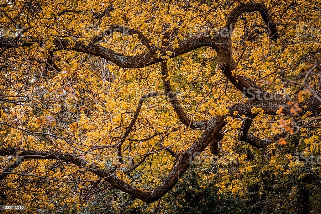 Yellow spring tree royalty-free stock photo