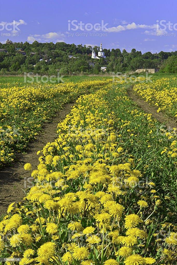 Yellow spring XXXL royalty-free stock photo
