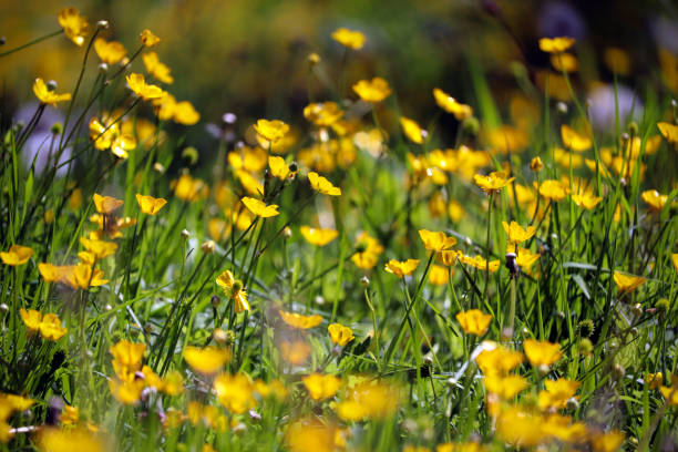 Yellow summer flowers and grass stock photo