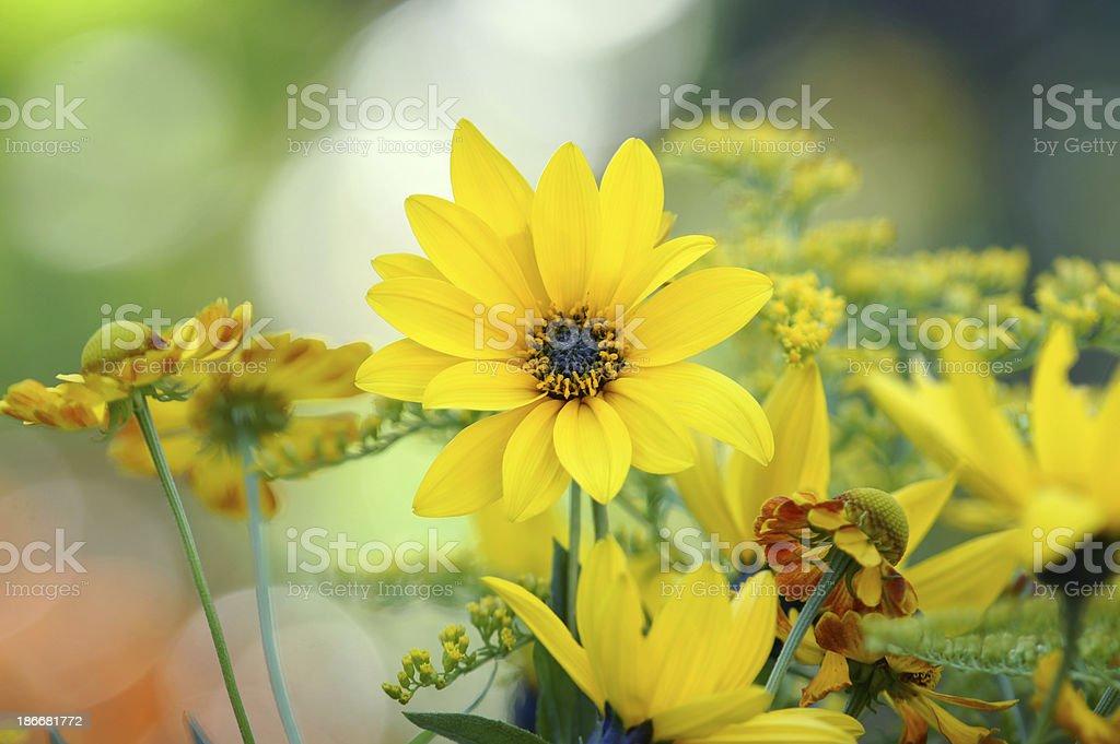 Yellow summerflowers royalty-free stock photo