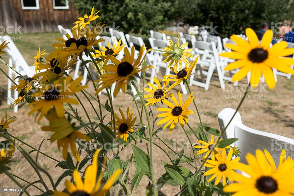 Yellow Sun Flowers And White Chairs Outdoor Country Wedding ...