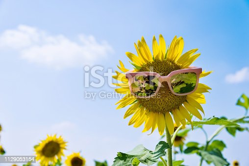 952436894istockphoto Yellow sunflower with sunglasses in the field 1129053154