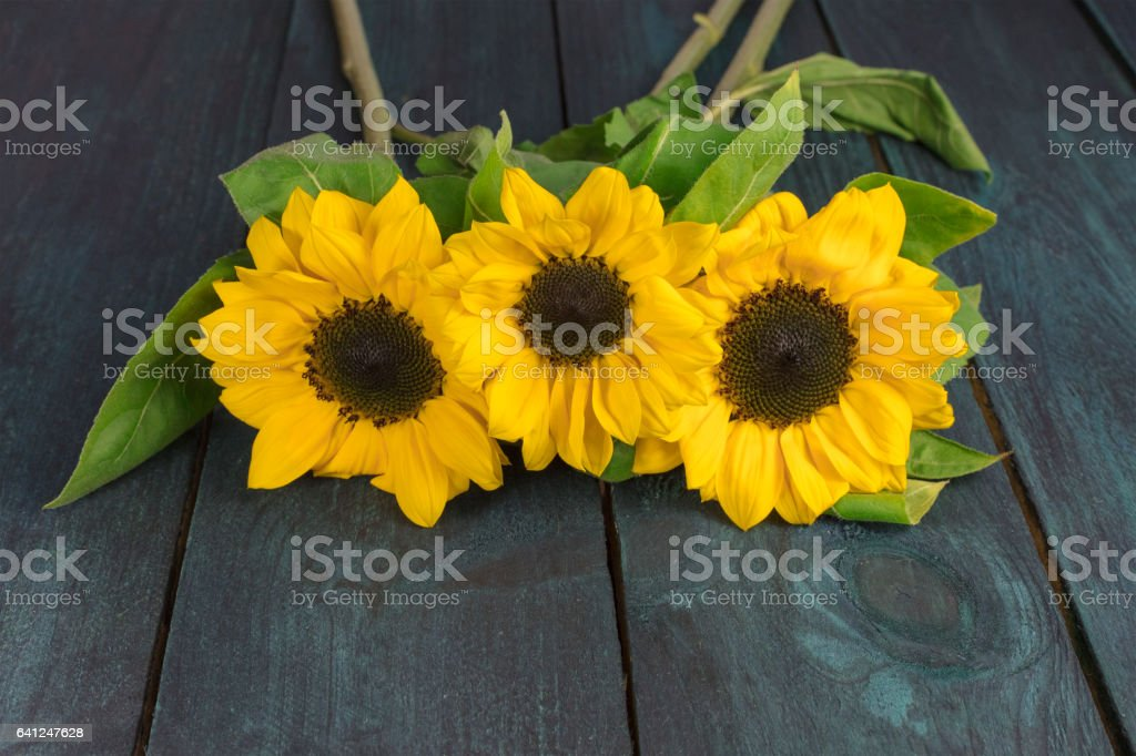Yellow Sunflowers With Green Leaves On Dark Texture Stock Photo Download Image Now Istock
