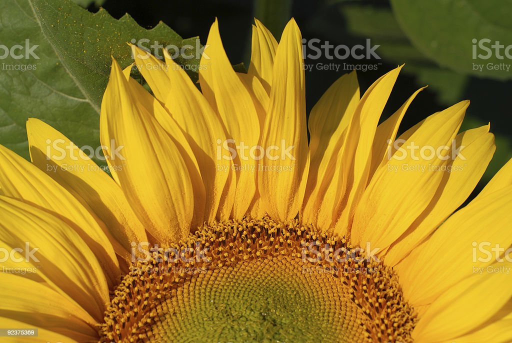 Yellow sunrise royalty-free stock photo