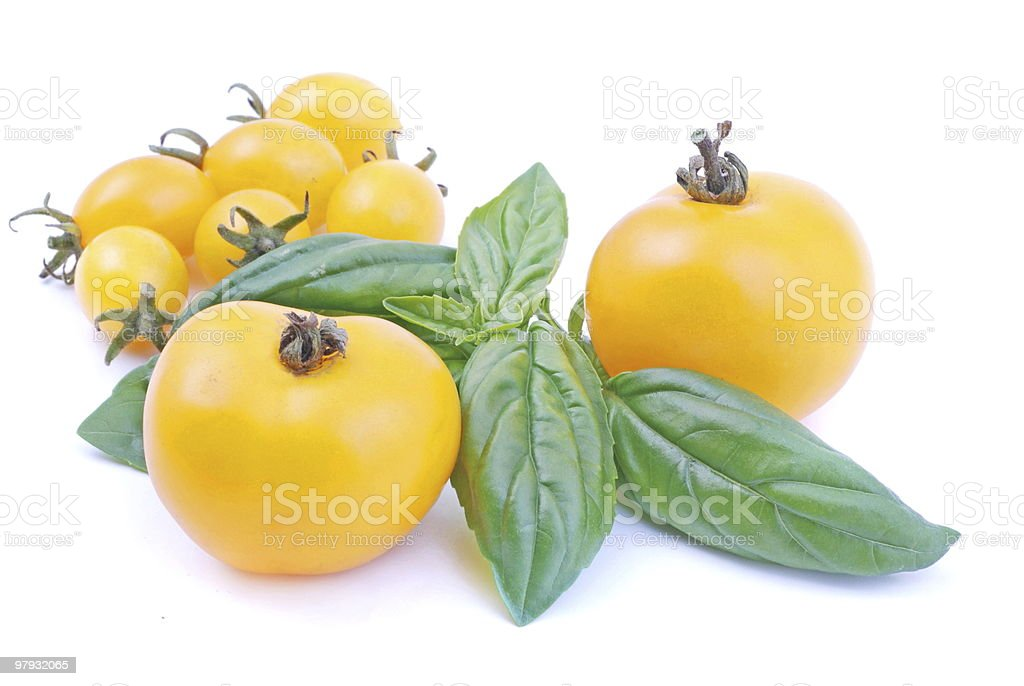 Yellow Tomatoes and basil royalty-free stock photo