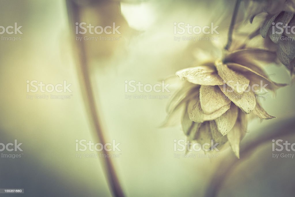 Yellow toned picture with leaves royalty-free stock photo