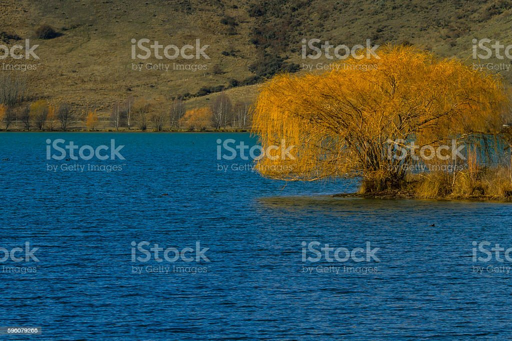 Yellow tree on the lake bank royalty-free stock photo