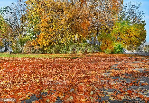Photo of Yellow trees, fallen golden leaves