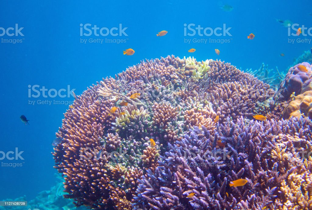 Yellow tropical fish in coral. Tropical seashore animals underwater...