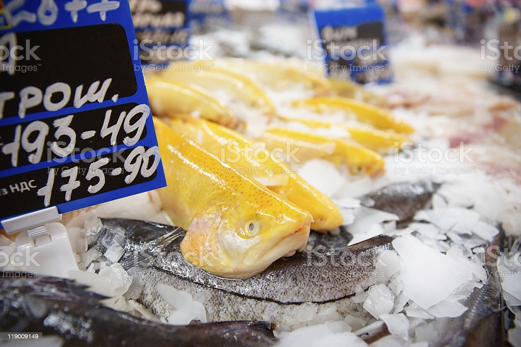 Yellow trout on fish market display stock photo