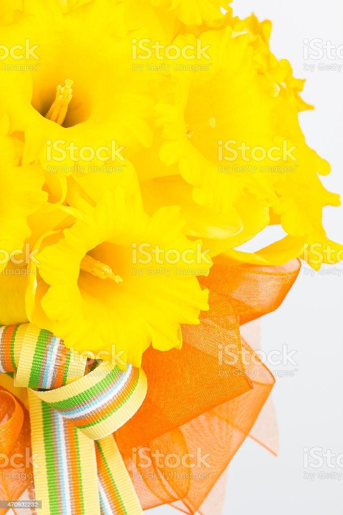 Yellow trumpet  daffodil bouquet stock photo