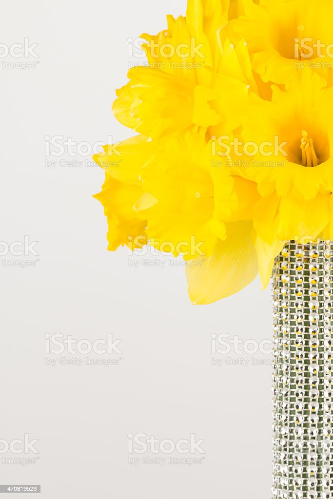Yellow trumpet daffodil spring wedding bouquet stock photo