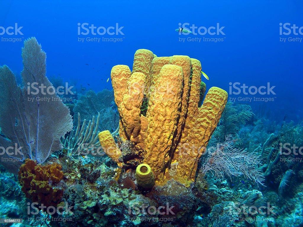 Amarillo esponja tubular - foto de stock