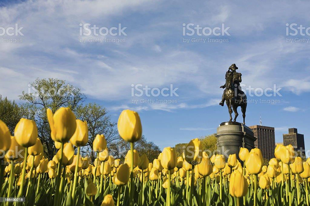 Yellow Tulips and George Washington stock photo