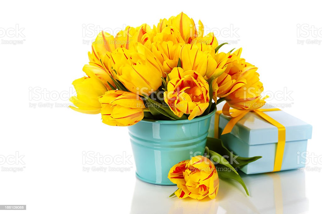 yellow tulips and gift box royalty-free stock photo
