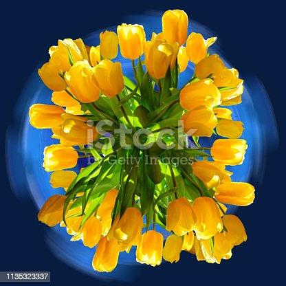 istock Yellow tulips arrangement on dark blue background 1135323337