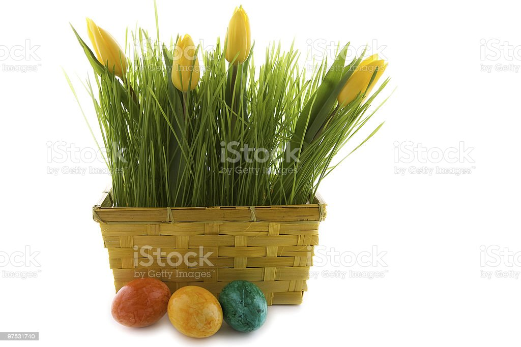 yellow tulips in green grass with easter eggs royalty-free stock photo