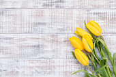 Yellow tulips on vintage white background