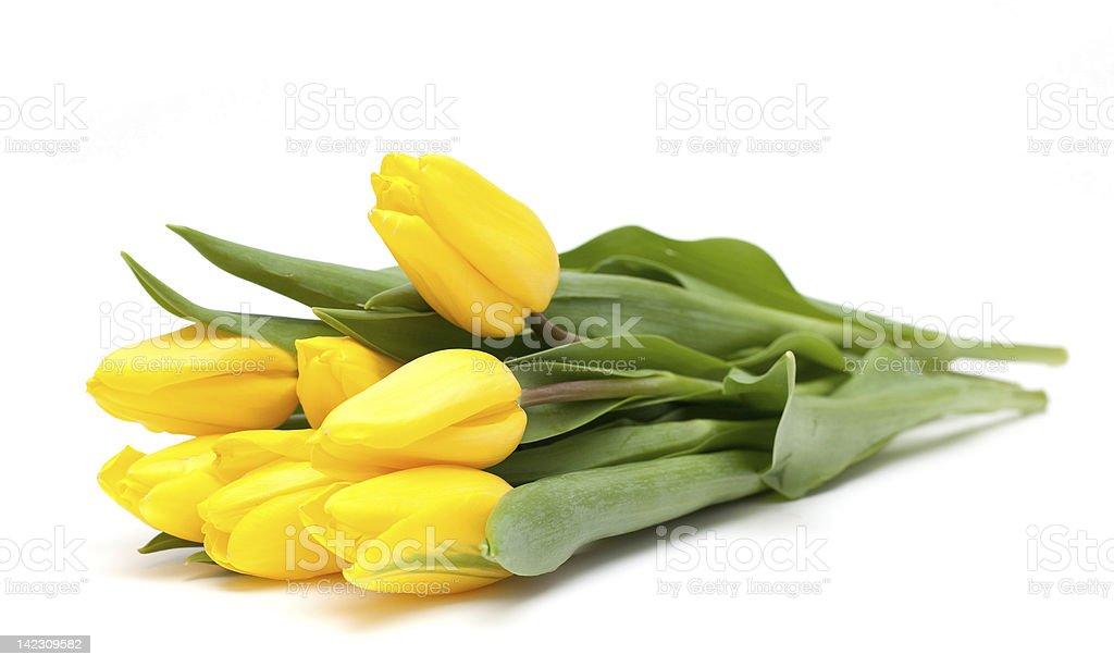 yellow tulips stock photo