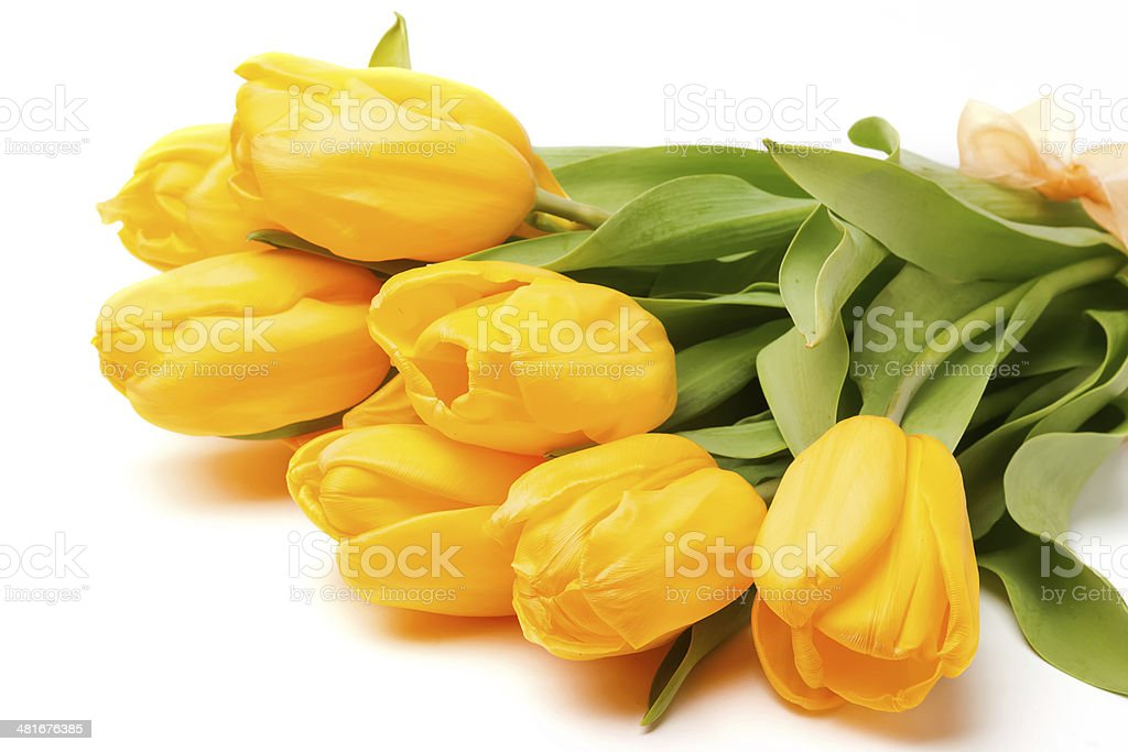 Yellow tulips royalty-free stock photo