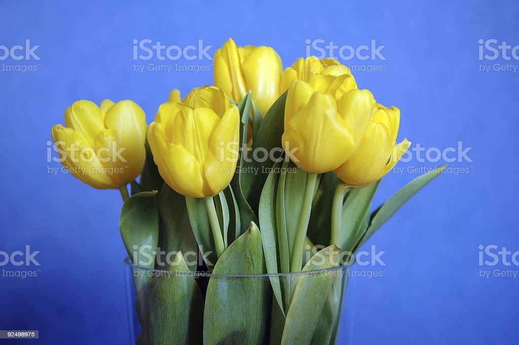 Yellow tulips royalty-free stock photo