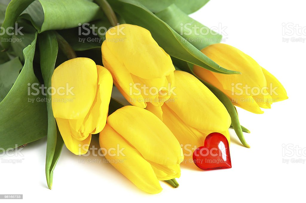 Giallo tulipani foto stock royalty-free