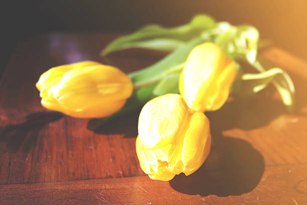 Yellow Tulips with Sun Flare stock photo
