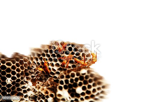 Yellow wasp nest isolated on white background.