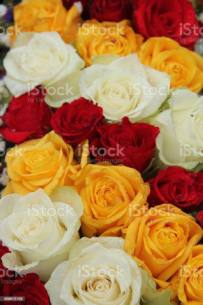 Matrimonio In Giallo E Bianco : Giallo bianco e rose rosse in un matrimonio accordo fotografie