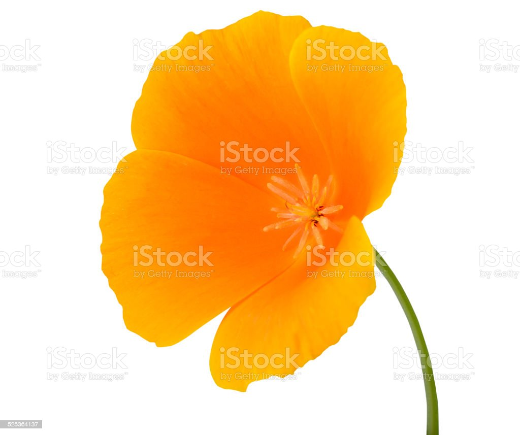 Yellow Wildflower With Orange Center Isolated Stock Photo More