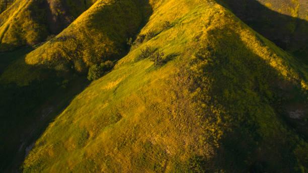 Gelbe Wildblumen blühen in den Hügeln der Santa Monica Mountains, Kalifornien, USA. Luftbild. – Foto