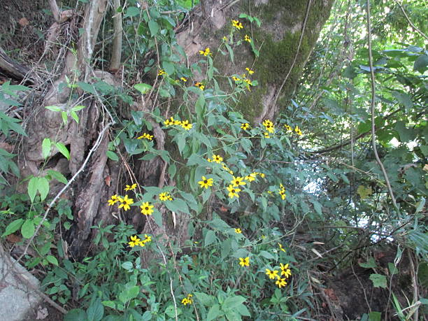 Yellow Wildflowers on a Vine Cling to a Tree stock photo