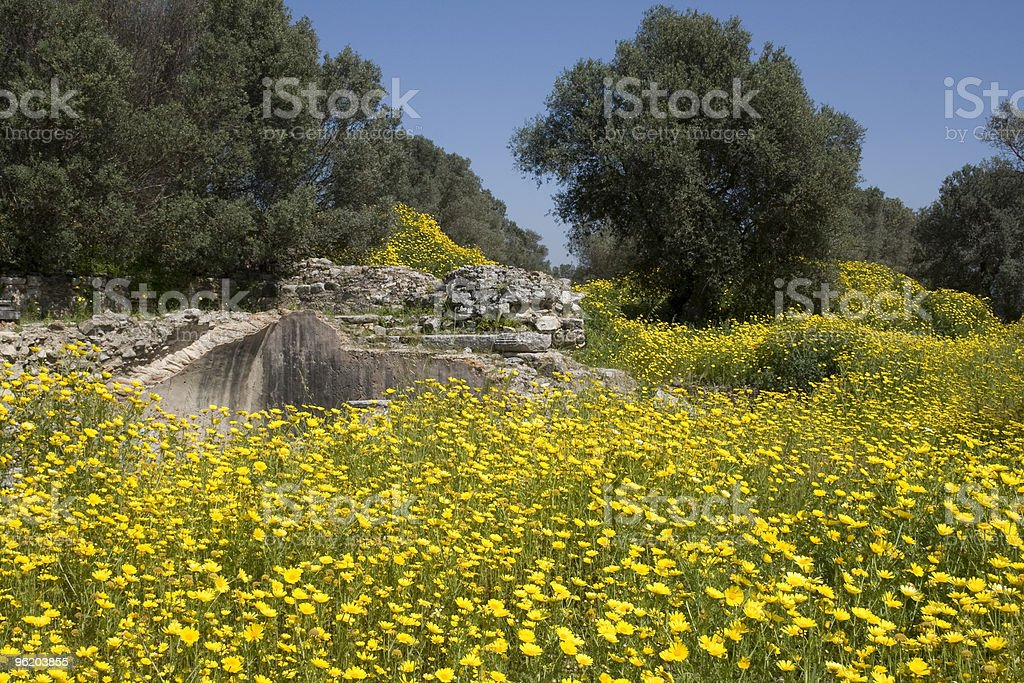 Yellow wildflowes and cretan ruins royalty-free stock photo