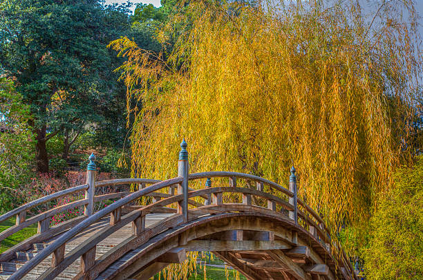 Yellow Willow Tree in Autumn with Curved Foreground Bridge stock photo