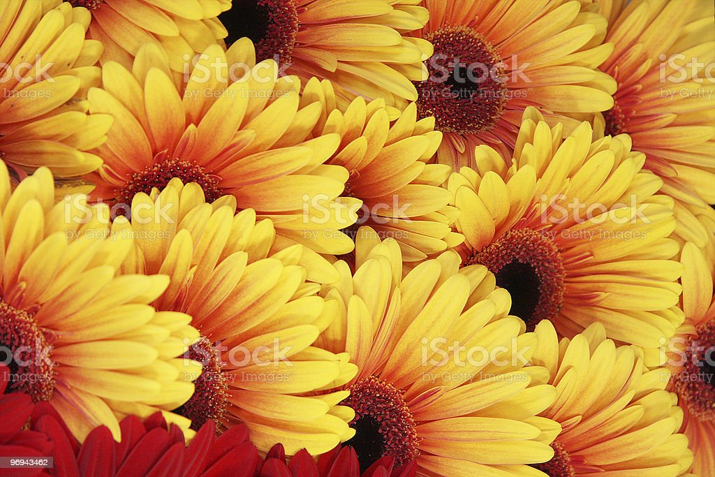 yellow with red flowers royalty-free stock photo