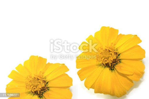 Flowers with white space for text.