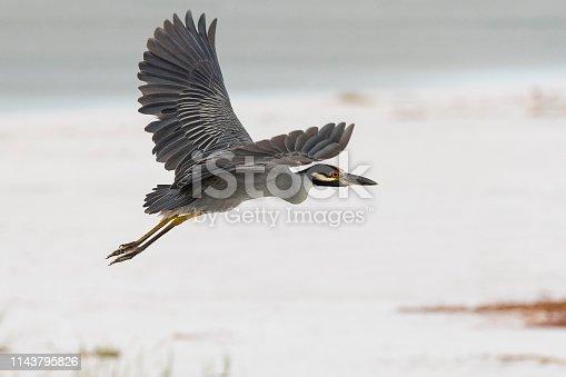 Beautiful bird in Florida.