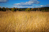 Yellowed grass on a meadow on a sunny autumn day. Forest in the background. Focus on the grass. Useful as texture or background.