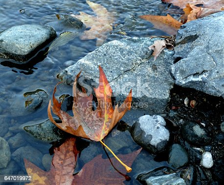 Yellowed leaves on streaming river in Autumn. Blue coloured stones on the river side.
