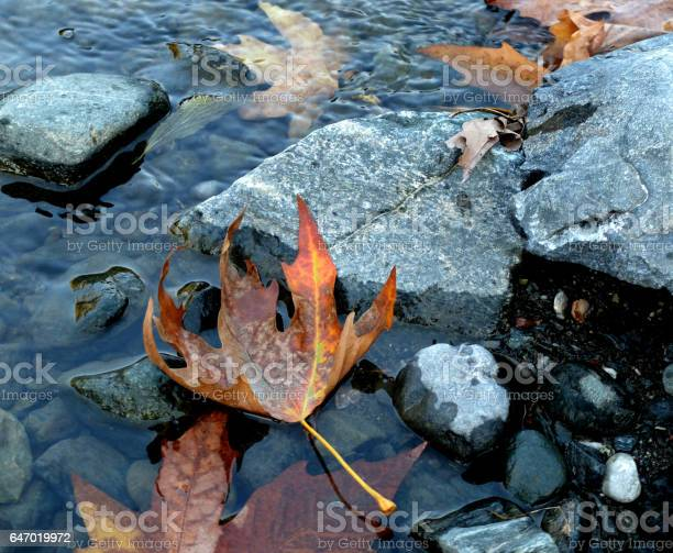 Photo of Yellowed leaves at the edge of the river.