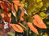 yellowed leaves of  trees on autumn