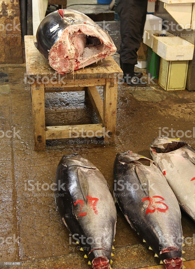 Yellowfin Tuna royalty-free stock photo