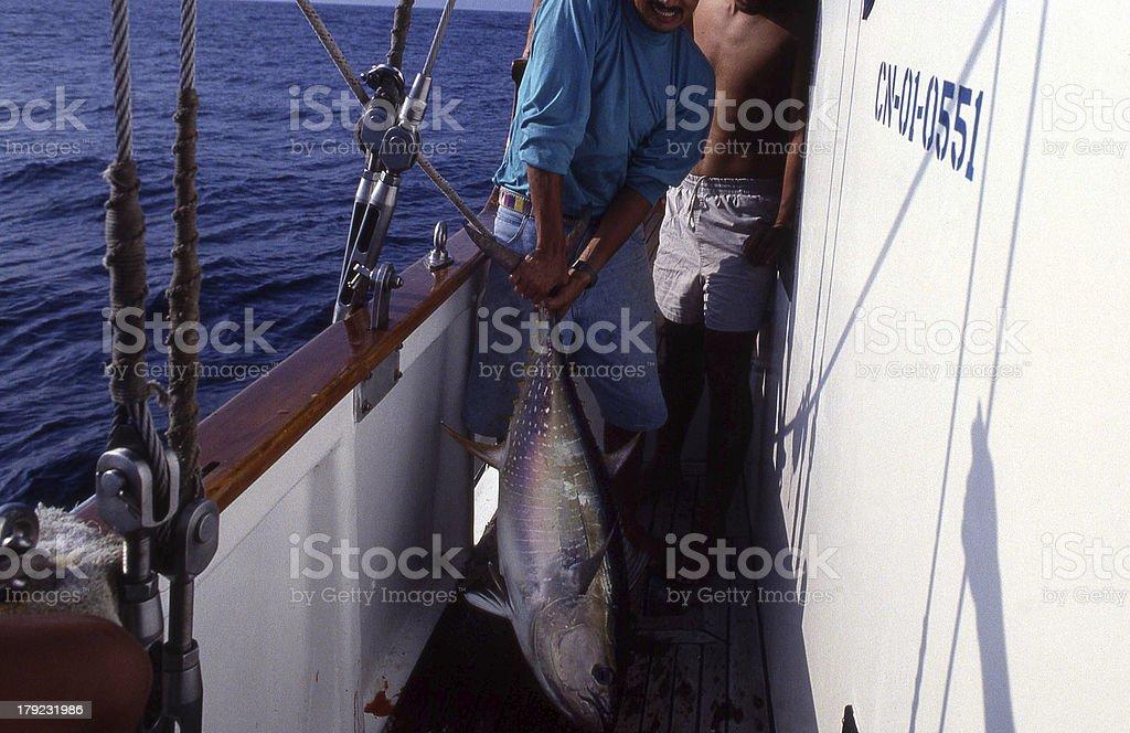 Yellowfin tuna_01 stock photo